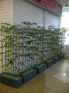planter 4